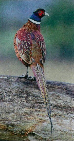 chudo-ptica