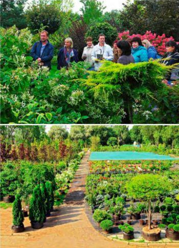 знакомство с технологией выращивания растений
