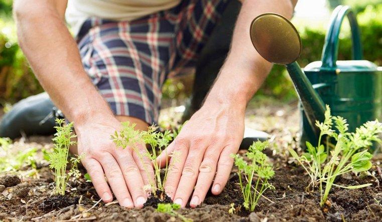 Где купить семена для посадки в саду