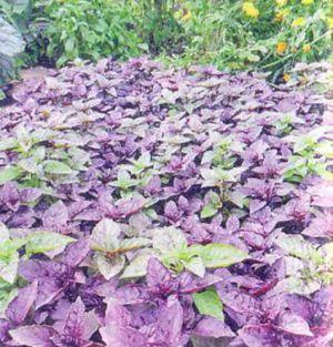 itogi-zelenogo-sezona