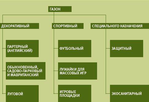 Схема современной классификации газонов