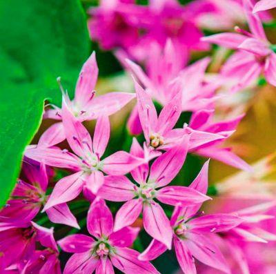 novye-cvetochnye-sorta