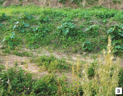 permakulturnyj-ogorod-rezultat-ekoposelenij