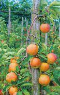 podpory-chataly-pod-plodovye-derevya