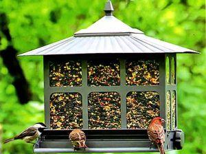 polza-ptic