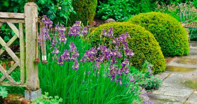 raduga-irisov