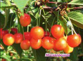 Москворецкая