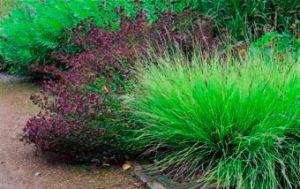 skromnoe-ocharovanie-zlakovyh-trav