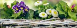 uhazhivaem-za-cvetami
