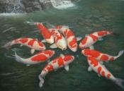 Зимнее содержание рыбы на примере карпов кои